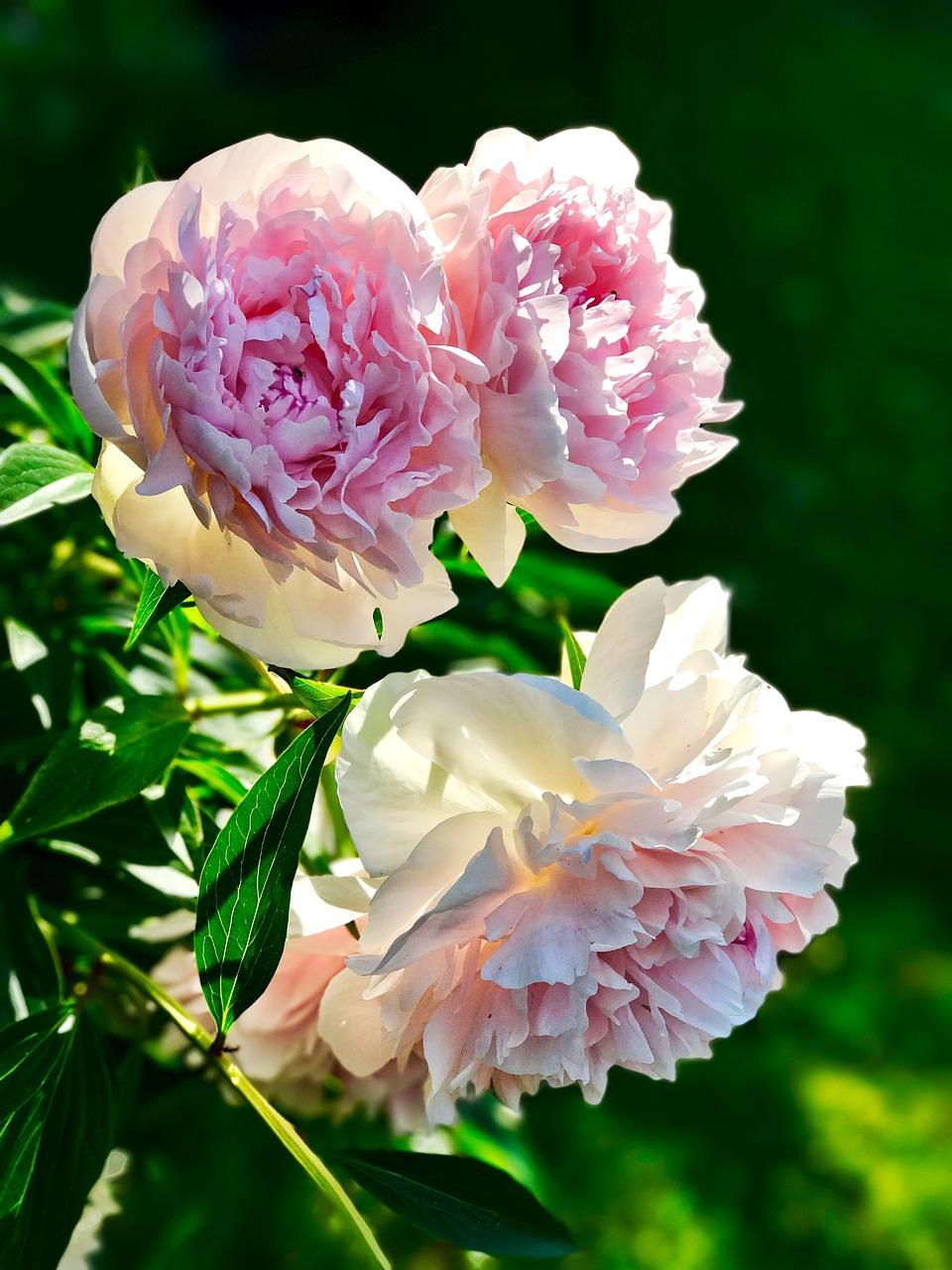 Welche Blumen Blühen Im September rosiger trend blumen applikationen auf blusen und taschen